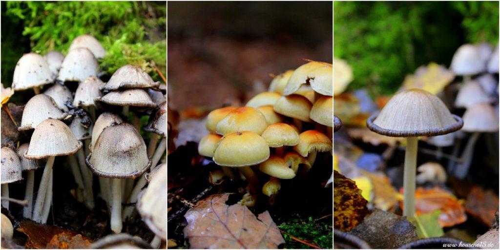 Herbstwald4